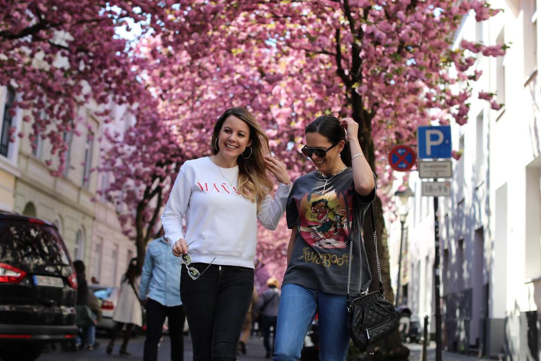 #Bonn Kischblüten-Hotspot! Cherry Blossom Avenue.