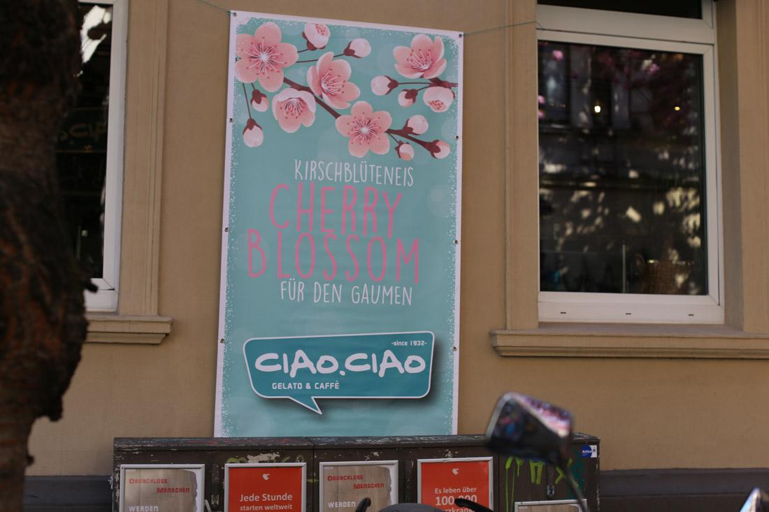 Ciao Ciao Gelato bei den Kirschblüten